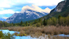 Mount Rundle across part of the Vermilion Lake Wetlands, Banff National Park, Viewed from the Rocky Mountaineer, Banff,  Alberta, Canada (Black Diamond Images) Tags: alberta canada kamloopstobanff rockymountaineer rockymountaineerroute canadianrockies canadiantourism armstronggroupltd goldleaf goldleafdomecoach train railroad railway travelphotography landscapes mountain mountains mountainside landscape forest pineforest river banff lakelouise bowrivervalley bowriver mountrundle banffnationalpark wetlands vermilionlakes mtrundle scenictours