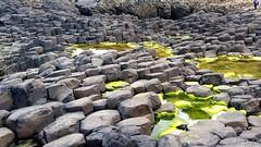 Giants Causeway (A.K. 90) Tags: irland urlaub tourismus natur steine basalt küste coast