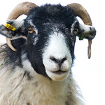 Swaledale in North Yorkshire Moors