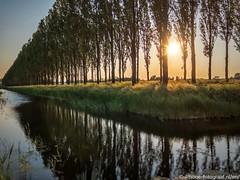 Evening Walk (iPhone Fotograaf) Tags: landscape evening sun tree groningen iphone8plus dutch