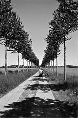 Stralsund / Devin - Allee (tom-schulz) Tags: x100f rawtherapee gimp monochrom bw sw stralsund thomasschulz allee baumreihe bäume strase
