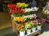 Bloemenmarkt (Capturing Travel Memories) Tags: flowermarket çiçekpazarı flower çiçek amsterdam netherlands europe avrupa hollanda attraction travel trip gezi seyahat souvenir gift shops dutch tulips lale