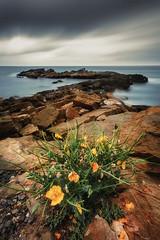Life (Anto Camacho) Tags: clouds sunshine landscape seascape flowers rocks longexposure yellow mediterraneansea castellón oropesa spain