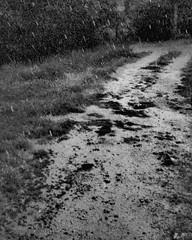 """""""PIOVO! E L'ANTICO PROFUMO DEL FANGO"""" -209  #artcontemporain #artcontemporary #urban #photography #photographer #artphotography#fotografia #city #arte #artecontemporanea #arteconcettuale #conceptual_art_gallery  #paolomarianelli  #artistcommunity#urbex#ur (paolomarianelli) Tags: city paolomarianelli rain pathway artphotography urbexphotography arteconcettuale urbex mud conceptualartgallery artistcommunity arte artecontemporanea artcontemporary photography poetry urban poesia way urbexphot fotografia artcontemporain photographer fango pioggia sentiero strada"""