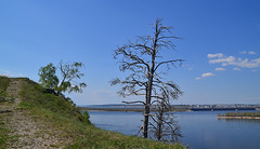 Dead pine on the edge (МирославСтаменов) Tags: russia zhiguli zhigulevsk volga river hill mountain mogutova slope edge pine overlook