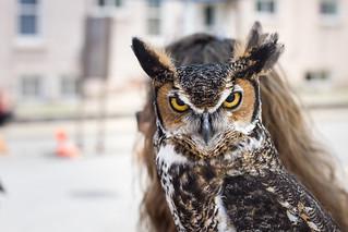 owl with hair