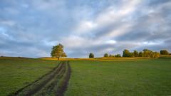 Дорога #своифото, #пейзаж, #природа, #утро, #рассвет, #дерево, #натура, #восход, #sunrise, #nature, #tree, #Landscape, #sun, #туман, #лучи, #foggy, (ЛеонидМаксименко) Tags: пейзаж восход утро лучи foggy tree nature landscape природа натура дерево sun рассвет своифото туман sunrise