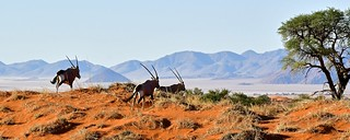 Namibie 2018 - Tok Tokkie Trails