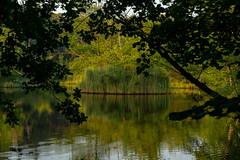 Solingen Ohligser Heide (bh-fotografie) Tags: ohlig solingen heide nrw nordrheinwestfalen bergisches land wald forest sony alpha a7 7 ii