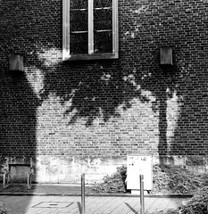 The shadow of trees (frankdorgathen) Tags: baum tree smartphone iphone iphone8plus blackandwhite monochrome schwarzweiss schwarzweis ruhrpott ruhrgebiet essen rüttenscheid gebäude building ziegel stone brick sonne sun licht light schatten shadow wand wall