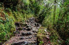 Place I left behind.. Deep Dark Woods (sakthi vinodhini) Tags: settlement annapurna nepal himalayas abc trek backpack mountains hills greenery ngc forest landscape mountain tree dark deep bamboo wet rainy hdr