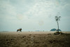 * (Sakulchai Sikitikul) Tags: street snap streetphotography summicron songkhla a7s sony sand beach horse thailand 35mm leica bubble seascape sea