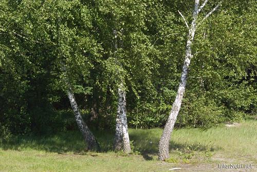 Шацький Національний Природний Парк Озеро Пісочне Берези InterNetri  Ukraine 196
