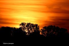 Sunset (Fabrice H. - Photography) Tags: sun sunset sunny sunsets zonsondergang couchedusoleil orange orangesky silhouet tree trees ronse vlaanderen vlaamseardennen nature natuur canon canon7dmk2 canon7dmkii canon70300mmisusml fabrice henneghien explore inexplore life popular flickr fabke people canon7d photography belgian view