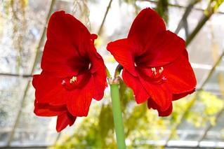 Allan Gardens Conservatory ~ Toronto Ont - Canada - Botanical Gardens