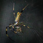 Spider to the Fly thumbnail