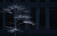 NYC Arch & Trees #9 (Ximo Michavila) Tags: nyc tree winter newyork city usa abstract windows building urban ximomichavila graphic architecture archdaily archidose archiref blue glass lines minimal dark contrast