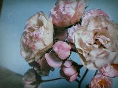 (meeeeeeeeeel) Tags: roses flowers rosas flores dalgona