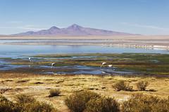 (giovanibr) Tags: chile atacama salar deserto sanpedrodeatacama elloa antofagasta tara laguna lagunas flamingo