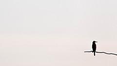 Kormoran (IIIfbIII) Tags: minimal anklam anklamerstadtbruch kormoran cormorant cormoran weite zen art fineart mv mecklenburg vorpommern birdphotography bird wildlifephotography wild wildlife naturephotography nature naturfotografie reduzierung