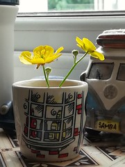Buttercups (daveandlyn1) Tags: flowers buttercups indoors eggcups pralx1 huawei