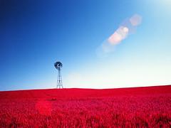 Palouse Wheat and Windmill (bac1967) Tags: kodak aerochrome infrared kodakaerochrome 120film 120 mediumformat mediumformatslr red desert kodakfilm reversalfilm reversal slidefilm slide bronica zenzabronicaetrsi zenza pacificnorthwest pnw palouse washingtonstate washington wa bluesky rural farm ranch wheat windmill