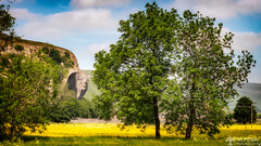 5th June 2018 (Rob Sutherland) Tags: kilnsey crag yorkshire dales north nationalpark buttercups flowers yellow trees rock cliff face summer britain british england english uk rural countryside outdoor life lifestyle wharfdale grassington skipton
