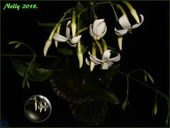 *May night with... (MONKEY50) Tags: may art digital white vase pentaxart green jasmine plant fullmoon autofocus artdigital netartii contactgroups musictomyeyes flickraward pentaxflickraward awardtree hypothetical beautifulphoto