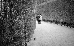 (Jack_from_Paris) Tags: l1012564bw leica m type 240 10770 leicaelmaritm28mmf28asph 11606 dng mode lightroom capture nx2 rangefinder télémétrique bw noiretblanc noir et blanc monochrom wide angle street paris mur verdure lierre touristes allée arbres haies