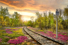 Radio (Jean-Michel Priaux) Tags: rail train line flowers forest track trip travel trees touring locomotion alsace france ried crossing traverse plain plaine lowland colors photoshop painting paint paintmapping