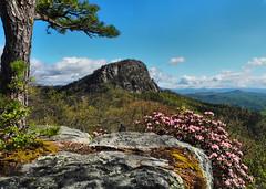Tablerock Mt. - Linville Gorge Wilderness (Lonnie Crotts) Tags: linvillegorge linvillegorgewilderness northcarolina mountains wilderness