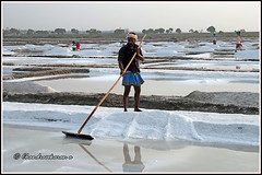7939 - Marakkanam salt pans (chandrasekaran a 50 lakhs views Thanks to all.) Tags: salt production storage marakkanam tamilnadu india canoneos6dmarkii tamronef28300mm saltpans