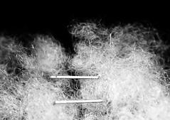 Cotton and Staples - Absurdity (Charlotte P.Denoel) Tags: fineartphotography conceptuel concept detail grosplan closeup macro contraste contrast agrafe coton noiretblanc nb blackandwhite bw