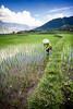 Rice job (Asian Hideaways Photography) Tags: rice ricefield farmer nature green clouds people conicalhat travel travelphotography asia asian rizière reflection sky vietnam paddy southeastasia water woman work canon candid vietnamese village naturallight natural field