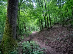 #Colour #Forest #Carrega (gabriele.785) Tags: parma carrega emilia romagna italy italia colours colori vivid light green wood tree shadow shadows opens open panasonic path sentiero sentieri leaf foglie nature natura bosco collecchio salabaganza park parchi parco forest