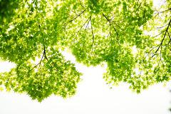 Green Light (sunnywinds*) Tags: summer green light kyoto leica aposummicron 京都 新緑 みどり
