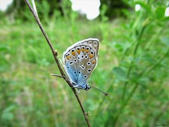 Butterfly 1686 (+1200000 views!) Tags: butterfly borboleta farfalla mariposa papillon schmetterling فراشة