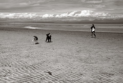 kyebaydogs3 (tesseract33) Tags: tesseract33 nikon light world art travel sea ocean sky clouds nikond750 d750 nikondigital beach beaches comox kyebay monochrome blackandwhite digitalblackandwhite k peterlangphotography peterlangphotographynet