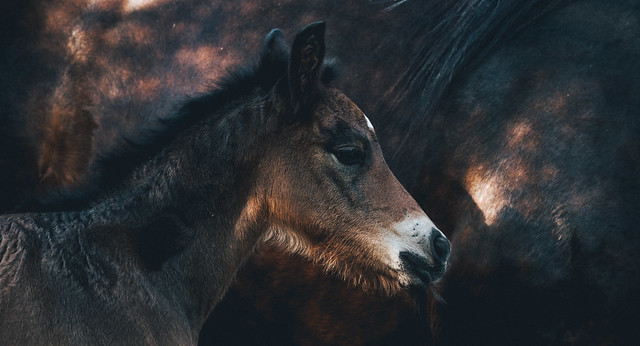 Foal of 2018