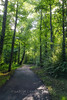 Side lighting, 2018.06.02 (Aaron Glenn Campbell) Tags: knoxville tn tennessee greenway thirdcreek outdoors optoutside nature macphun luminar softfocus glow backlit backlighting trees wooded path trail walk hiking leaves foliage lush greenery sony a6000 ilce6000 mirrorless sigma 19mmf28exdn primelens wideangle emount