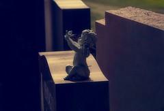 petit ange  /  Little angel (cébé céline) Tags: ornement noir chérubin cupidon pierretombale symbole ailes oiseau statue colombe mort paix tranquilité ange angel tranquility peace death dove bird wings symbol tomb stone cupid cherub black ornament
