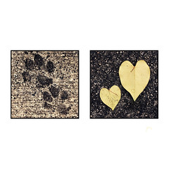 Hearts & Paws (jeanne.marie.) Tags: patternsinnature 100x2018 dog prints paws sidewalk wet leaves redbud hearts iphoneography iphone7plus diptych 100xthe2018edition image60100