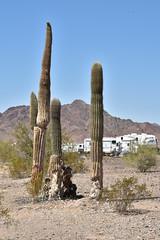 La Posa Long Term Visitor Area (BLMArizona) Tags: lakehavasu blmarizona arizona recreation