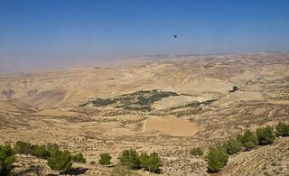Wüste / Desert