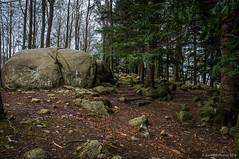 El rincón de las rocas (SantiMB.Photos) Tags: 2blog 2tumblr 2ig santafe montseny rocas rocks bosque forest geo:lat=4177249435 geo:lon=246517857 geotagged riellsriellsiviabrea cataluna españa esp