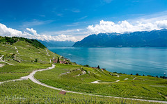 beautiful lavaux (alain.winterberger) Tags: lavaux unesco patrimoine panorama paysage landscape lac lake lacléman lakegeneva genfersee vignoble vineyards epesses nature nikon nikonpassion