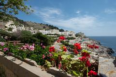 Santa Cesarea (Janet Marshall LRPS) Tags: santacesarea puglia apulia italy coastaltown landscape seascape flowers
