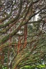 Urban Jungle (Gunn Shots.) Tags: albertpark auckland newzealand tree trees branches textures