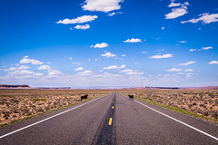 Somewhere in southern Utah (rdpe50) Tags: landscape road highway desert desolate barren cows solitude sky clouds utah usa