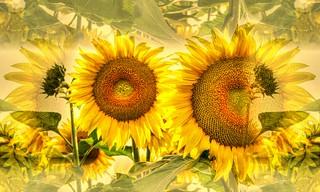 * Verso il sole * Towards the sun *  (in Explore) *